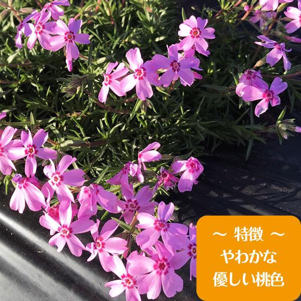 autumnrose80