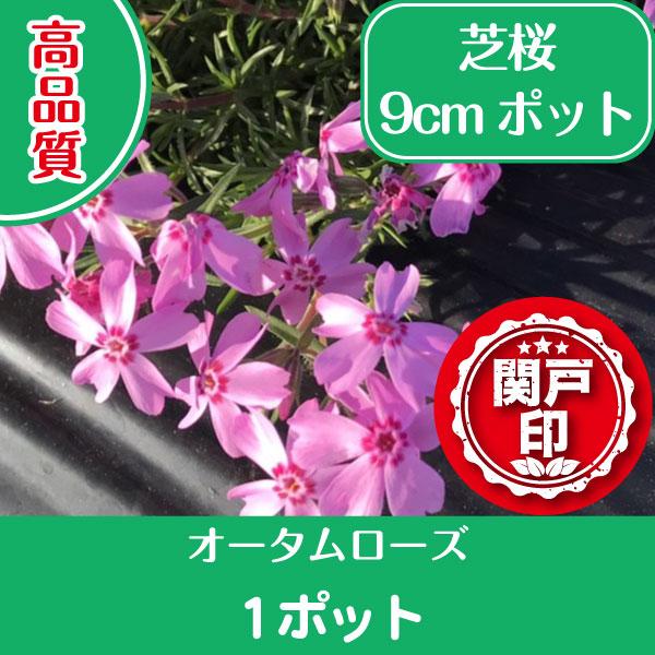 autumnrose1