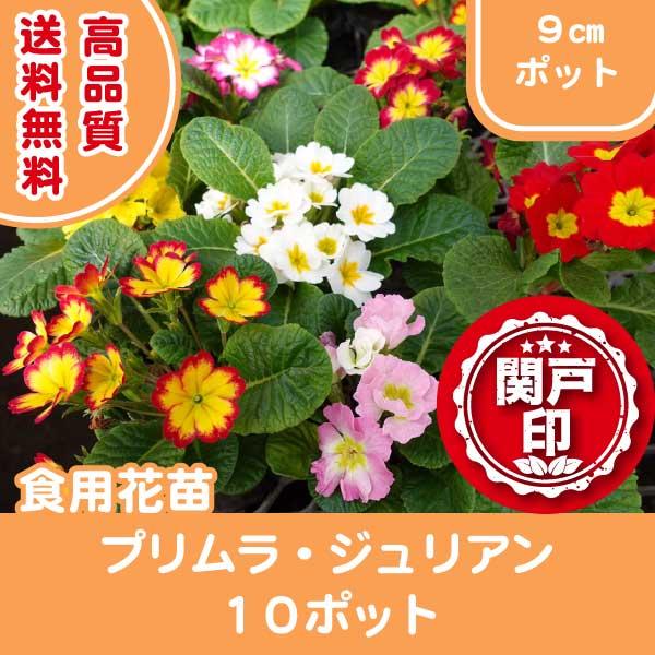 purimura10p