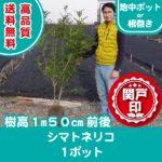 shima-150cm