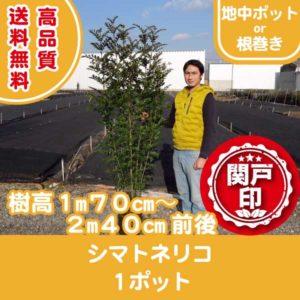 shima-170cm-240cm