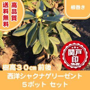 syakunage-5p