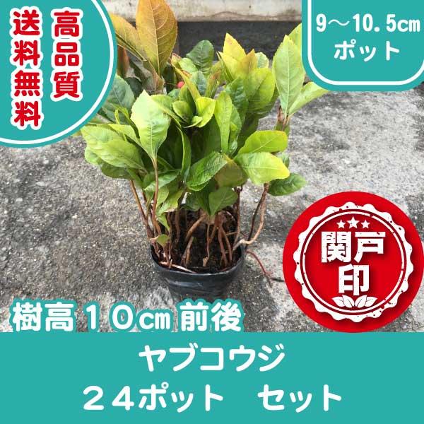 yabukoji24p
