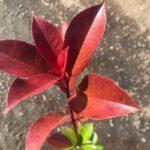 reddorobin50-10p