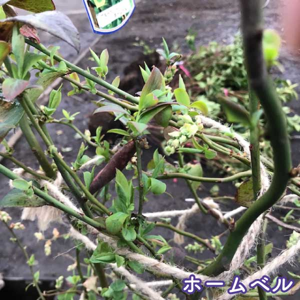 blueberry50-2pset