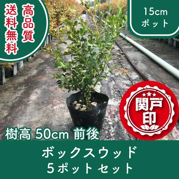 boxwood50-5p