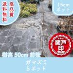 gamazumi50-5p