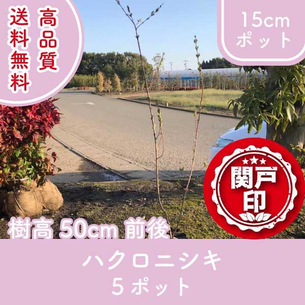 hakuronishiki50-5p