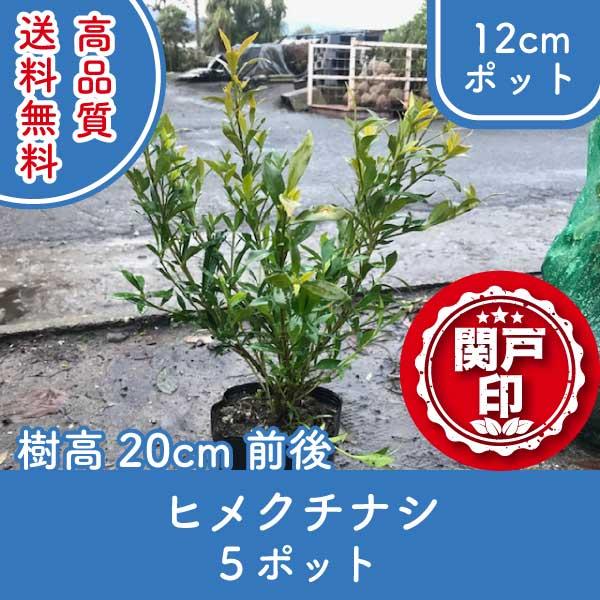 himekuchinashi20-5p