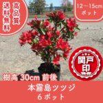 honkirishima30-6p