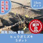hyuugamizuki30-5p