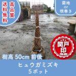 hyuugamizuki50-5p