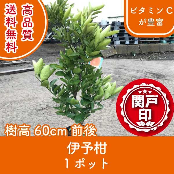 iyokan60-1p