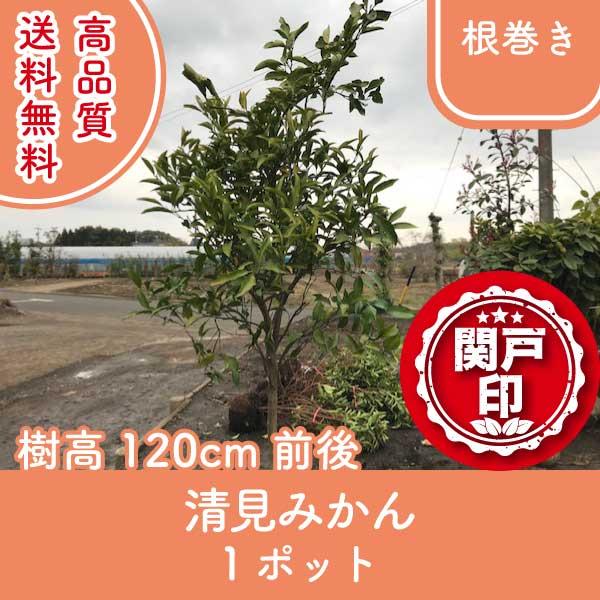 kiyomimokan120-1p