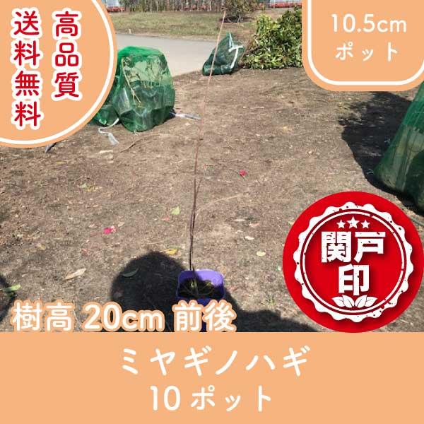 miyaginohagi20-10p