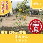 natsumikan120-1p