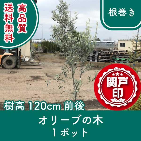 olive120-1p