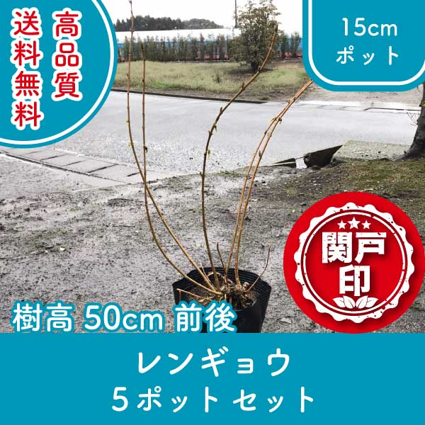rengyo50-5p