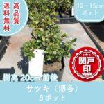 satsukihakata20-5p