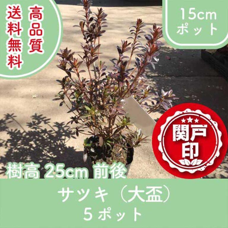 satsukioosakazuki25-5p