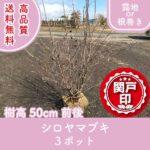 shiroyamabuki50-3p