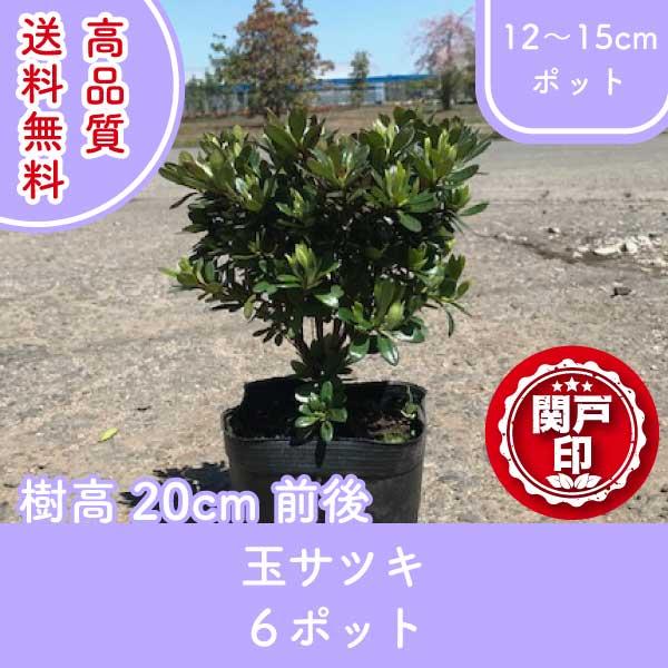 tamasatsuki20-6p