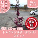 tokiwamansakupink120-3p