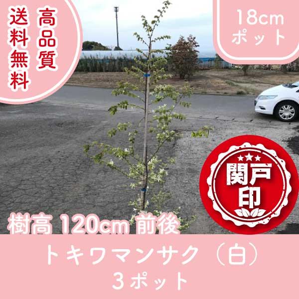 tokiwamansakushiro120-3p