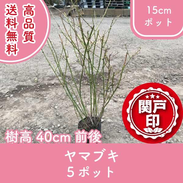 yamabuki40-5p