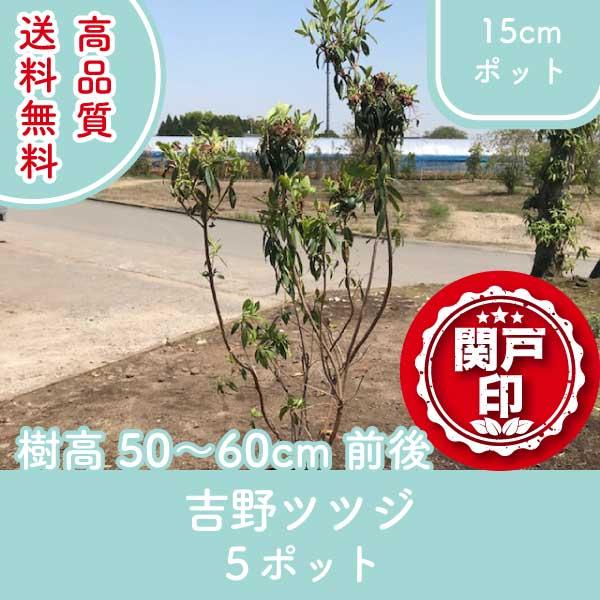 yoshinotutuji50-60-5p