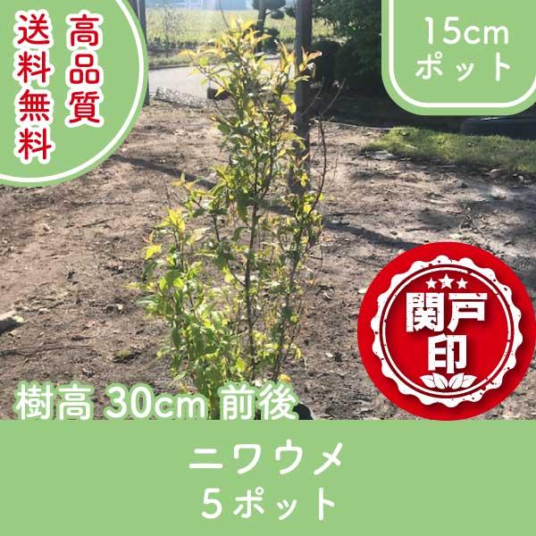 niwaume30-5p