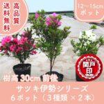 satsukiise3-30-6p