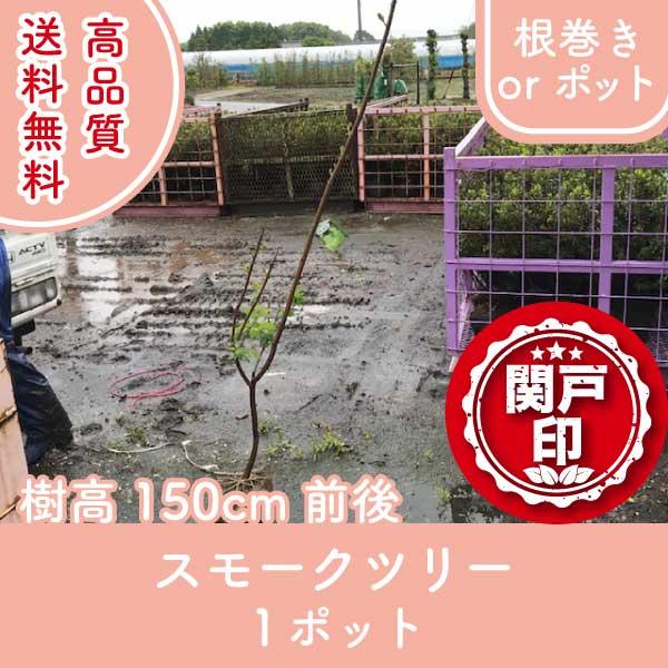 smoketree150-1p