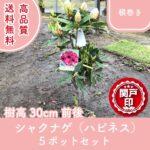 syakunagehappi30-5p