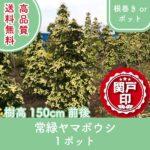 j-yamaboushi150-1p