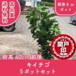 kiichigo40-5p