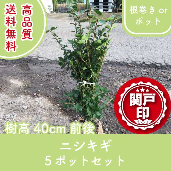nishikigi40-5p