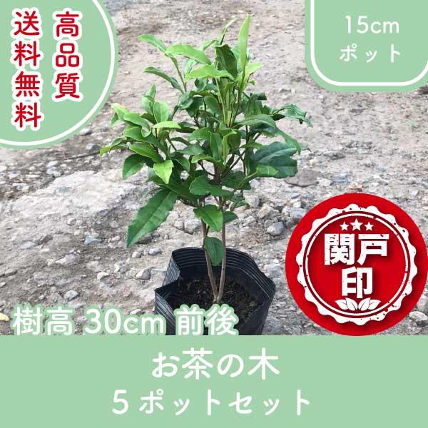 ochanoki30-5p