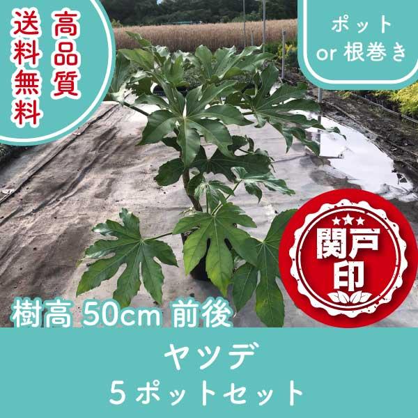 yatsude50-5p